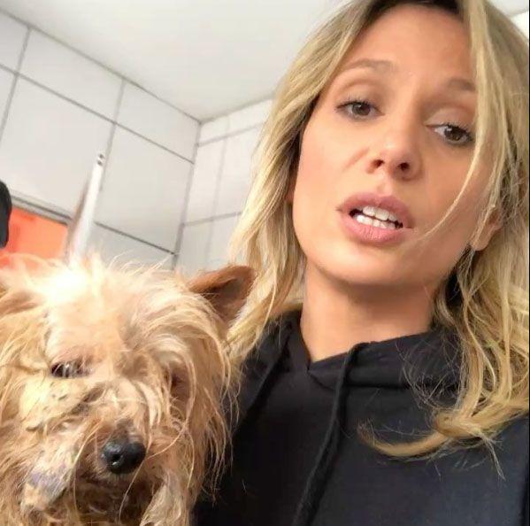 135 cães são resgatados em condições precárias em canil de Osasco